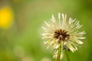 kordiky maj (4)
